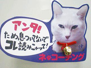 『ネ*コーチング 猫が教えてくれた「本当の幸せ」』POP